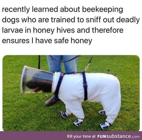 Dog bee keeper