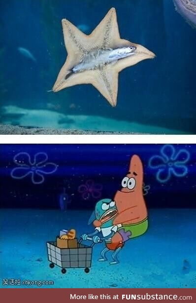 Starfish hugging another fish, accurate enough