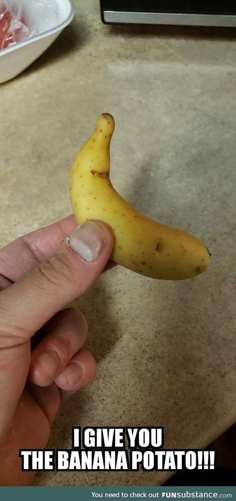 Banana Potato for scale