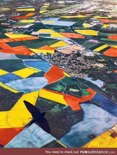 Aerial view of the Netherlands during Tulip season