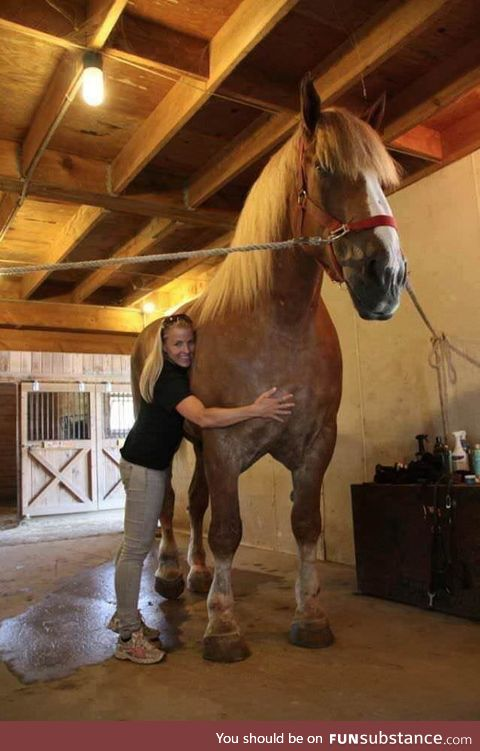 The World's Tallest Horse Alive Today --- Big Jake