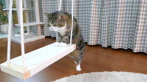 Maru wishes to get on the swing