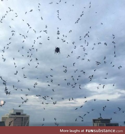 These are mosquitos. Remember to be kind to your web slangin neighbors