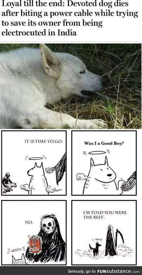 Did somebody say goodest boye?