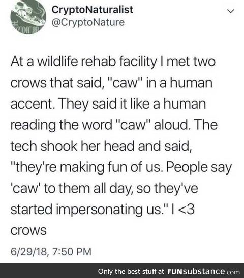 Crows are making fun of humans