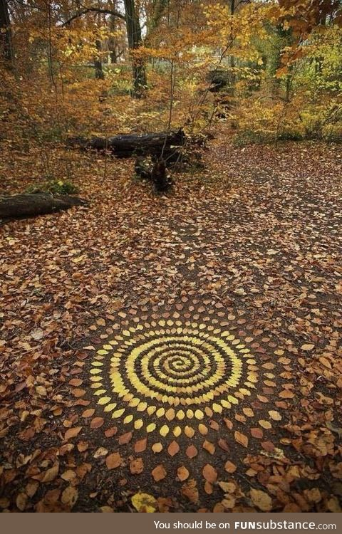 Organizing leaves into elaborate patterns (by James Brunt)