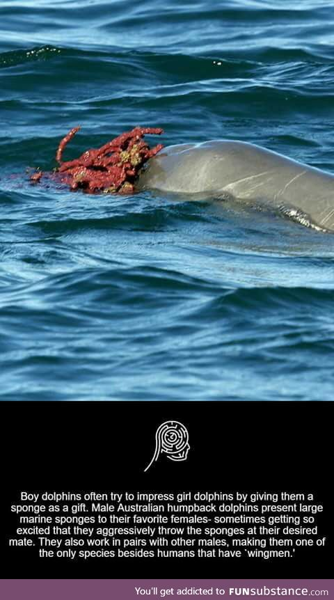 Dolphins are cool creatures