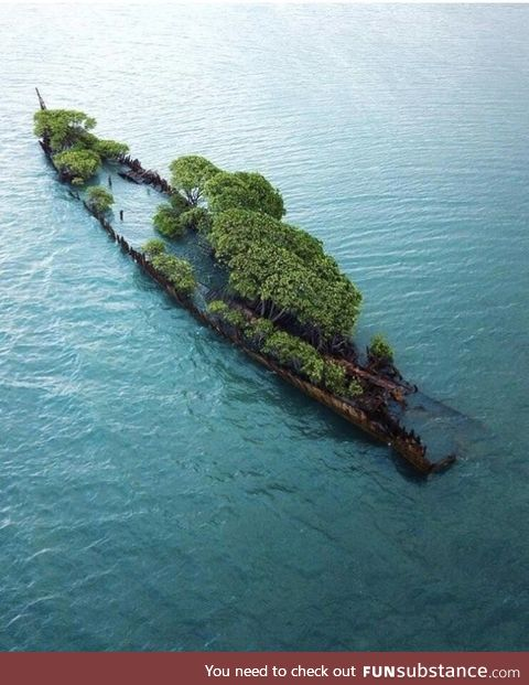 This abandoned ship in Australia has been completely taken over by nature