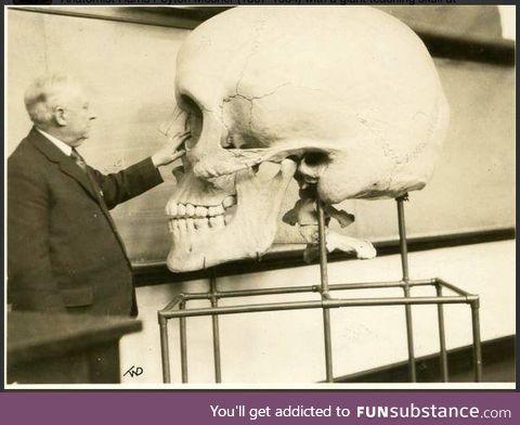 Old medical school teaching skull