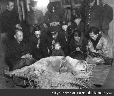 The last photo of Hachikō, the dog who waited for his master's return each day