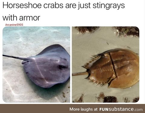 Stingrays with armor