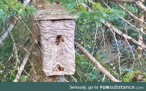 This nest box taken over by wasps