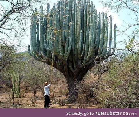 that. cactus.