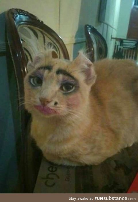 That's what happens if you leaving a young girl with a cat