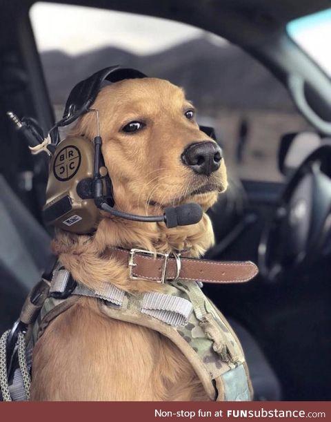 Commander good boy