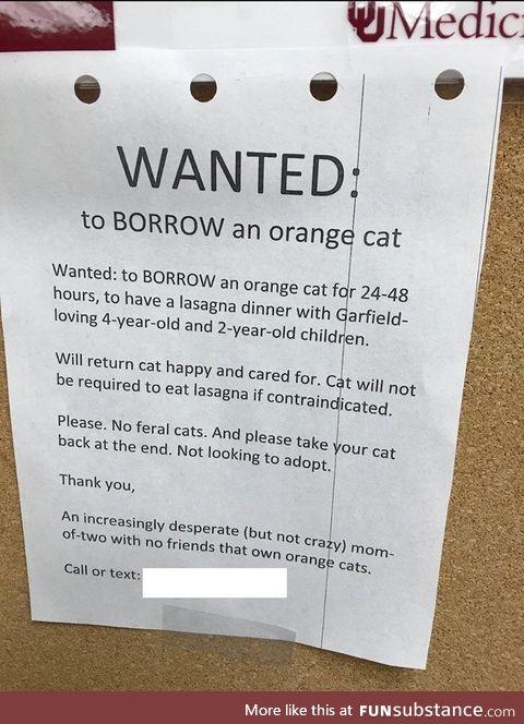 Wanted: Orange cat