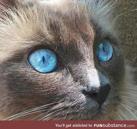 This cat's eyes