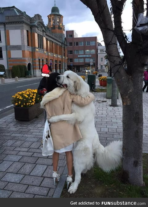This dog hugged everyone who walked by outside in Japan