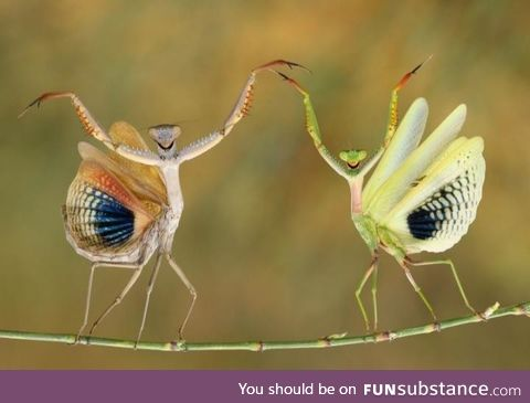 Winner of the National Geographic's 2014 photo contest