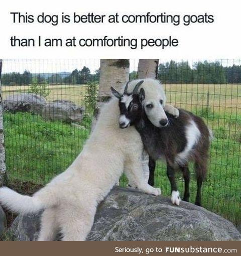 Comforting dog