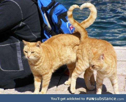 A tail of feline love <3