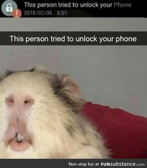 Secret life of Hamsters