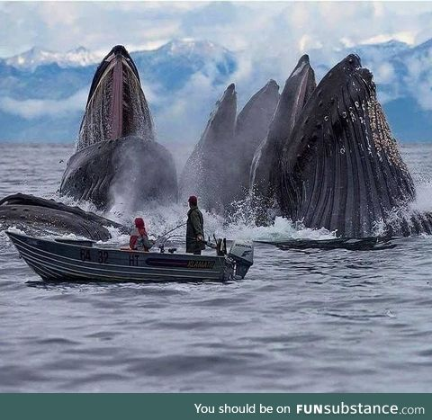 Whales at Svalbard, Norway