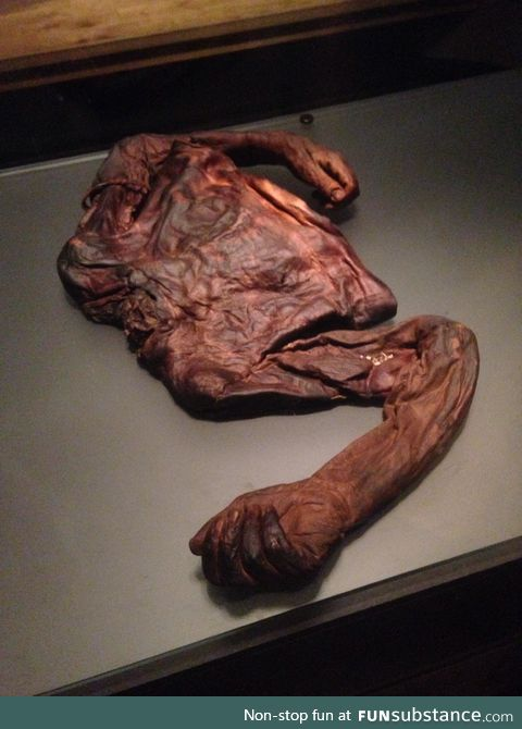 """The """"Old Croghan Man"""" Preserved torso of a man found in an Irish bog from 2000+ years ago"""