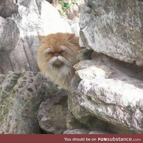 I'm 100% sure this f**king cat knows Kung Fu