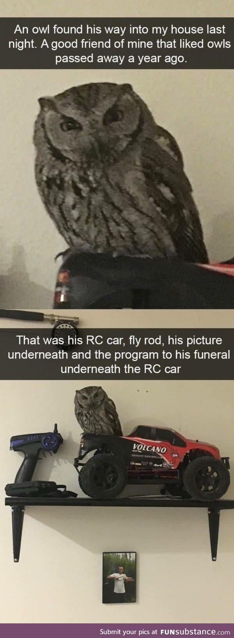 Never tell me the owls