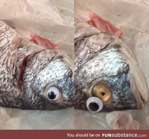 Fish store was shutdown for using google eyes to make fish look more fresh!