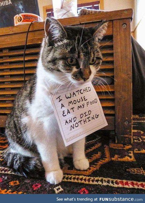 Just a cat shaming