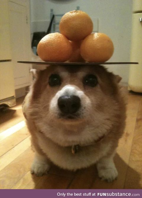 Perfectly balanced doggo