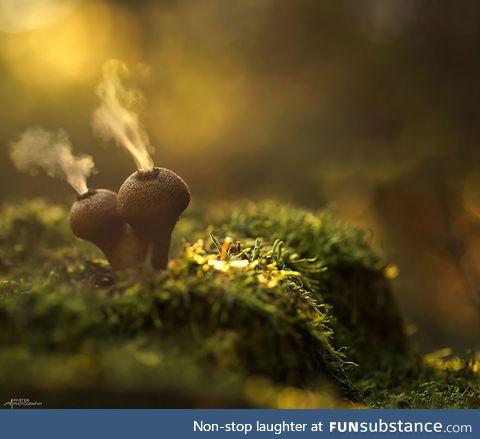 The Mystical World of Mushrooms