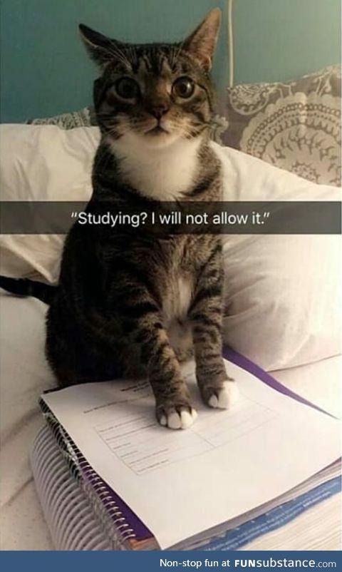 No studying