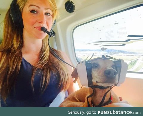 Puppy on his first flight
