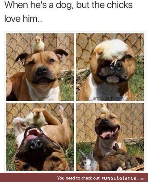 When he's a dog, but the chicks love him.