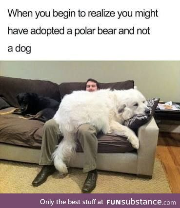 Supersized doggo