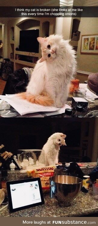 Is you broken kitten?
