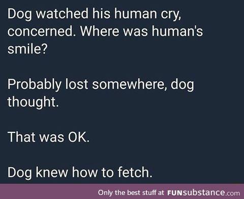 Dog use fetch