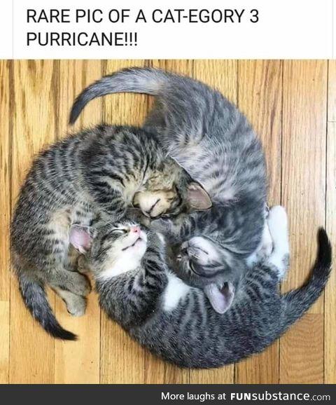 Purricane cat 3