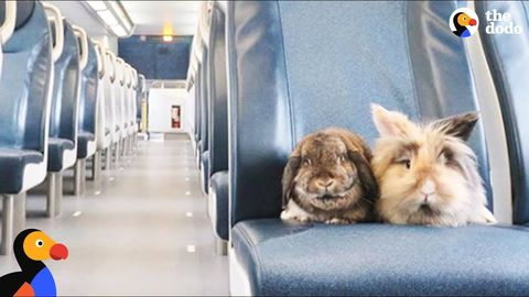 Start your day off hoppy (Sumba and Burny the bunnies)