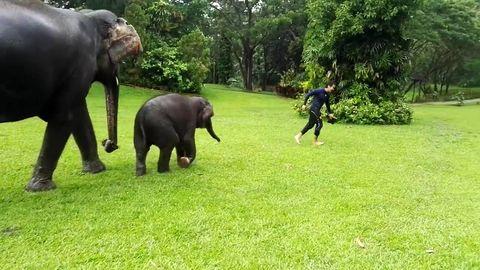 Baby elephant imitate man sliding in the rain