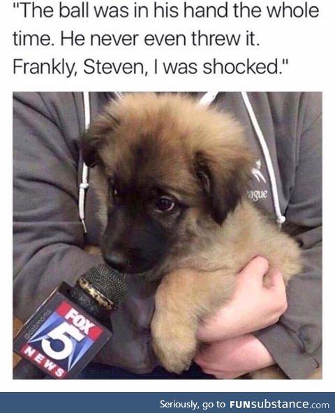 Dog reports