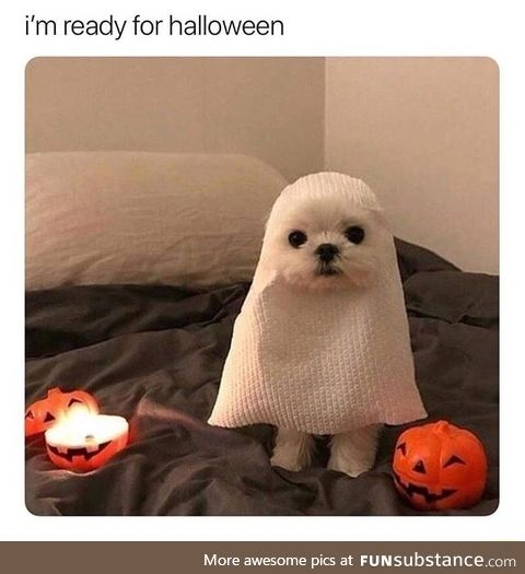Pupper is a ghost