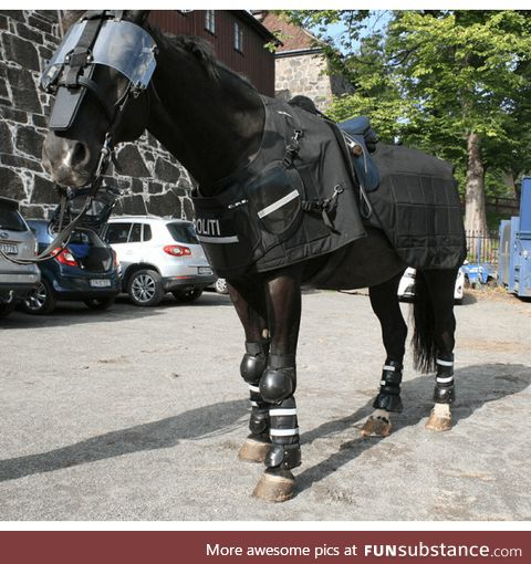 Tactical police horse