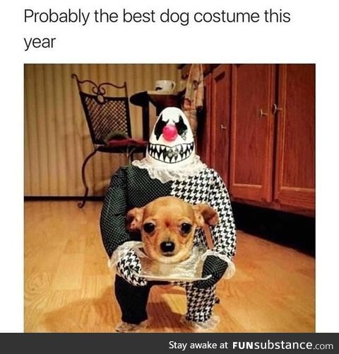 Best dog custome