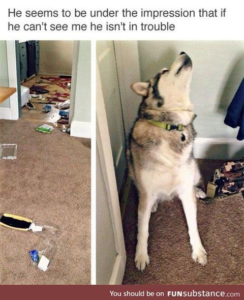 Husky troubles