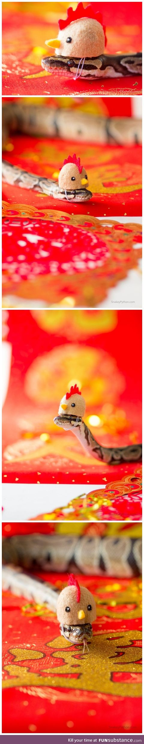 This Snek in a Rooster hat