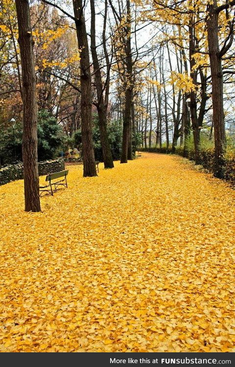 Leaves-covered ground